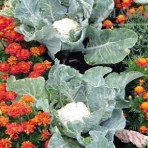Защищаем растения от вредителей