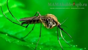 Избавляемся от комаров