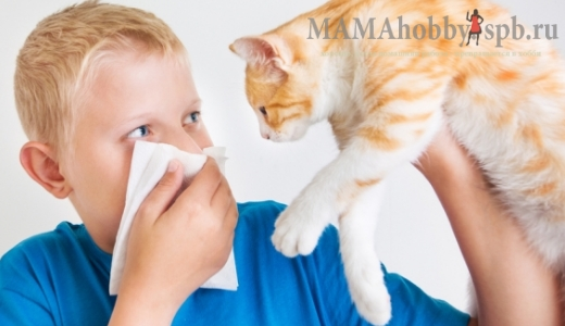Как преодолеть аллергию на кошачью шерсть